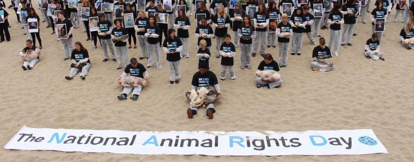 Les animaux ont-ils des droits?
