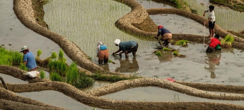 L'exploitation des ressources alimentaires est-elle durable?