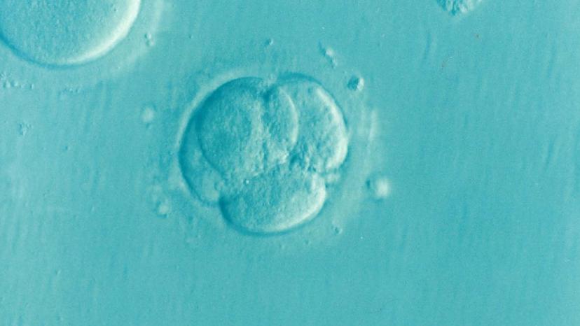 Avis de l'Académie des sciences morales et politiques sur la révision de la loi sur la bioéthique (15 octobre2018)
