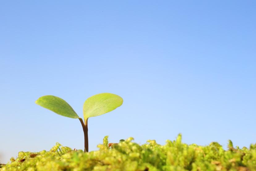 Développement durable, monde de la technique et société durisque
