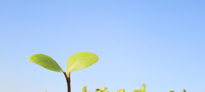 Les impacts de l'environnement sur lasanté
