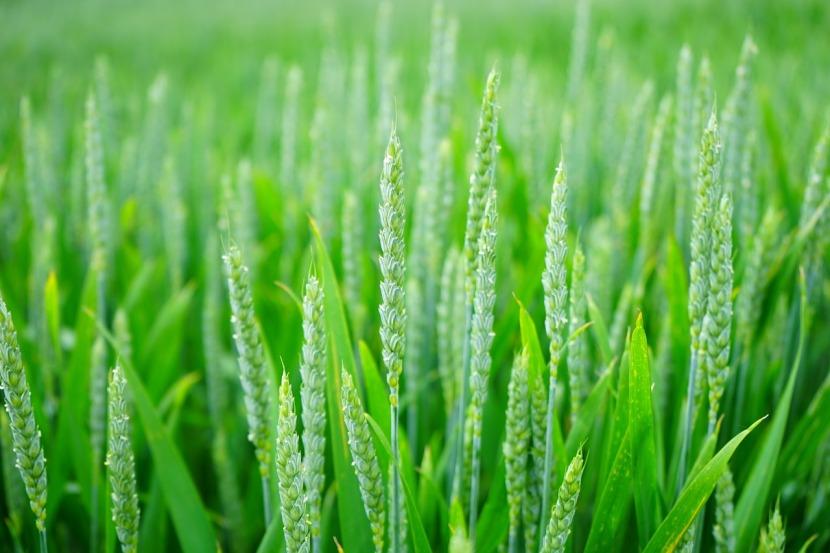 [10 décembre 2018] Bertrand Saint-Sernin, «L'opinion publique devant les OGM»
