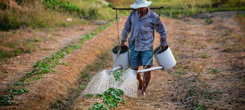 Le développement durable : une nécessité pour nourrir le monde?